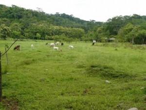Flat Usable Farmland