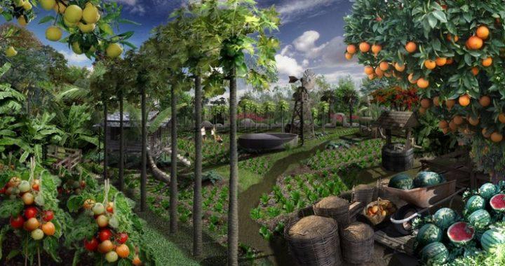 Organic Gardening Costa Rica