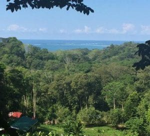 4.5 ACRES – Whales Tale Ocean View Property With All Year Creek, Very Flat And Usable, Easy Access!!