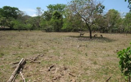 12.75 ACRES – Flat Usable Pasture Land With Paved Road Frontage In Town Of Hatillo!!!