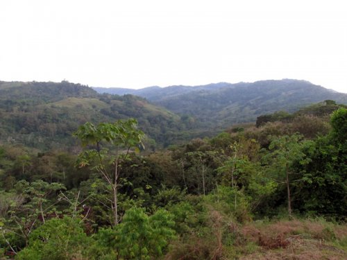 24 ACRES - Beautiful Property With Great Mountain Views, Multiple Building Sites, 2 Creeks