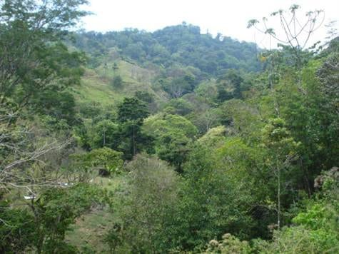 5 ACRES - Multiple Building Sites With River Winding Through And Easy Access To 80 Ft Waterfall!!!