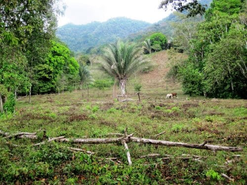 Costa Rica Property Listings Palmar Norte Lot For Sale