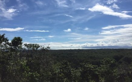 336 ACRES – Ocean View Agricultural Farm With African Oil Palms, Hardwoods, And Organic Gardens!!!