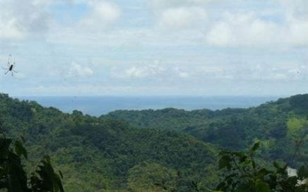 7.5 ACRES – Amazing Acreage w/ Ocean, Mountain, and Waterfall Views!!!