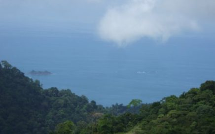 83 ACRES – Ocean View Farm With Mix Of Pasture And Jungle And 2 Natural Springs!!!