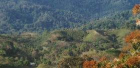 790 ACRES – Ocean View Acreage With Huge Potential 20 Min From Quepos!!  Great Price!!!