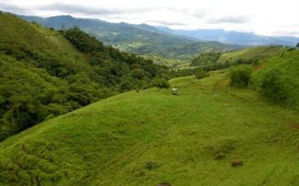 114 ACRES – Open Rolling Hills, Amazing Mountain Views, 2 kms Of River, 2 Talapia Ponds!!!