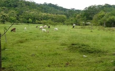 15.5 ACRES – Flat Usable Farmland With Great Access And Small Ocean View House!