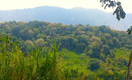 55.5 ACRES – Multiple Waterfalls, Municipal Water, Electric, Easy Access, 15 Minutes From The Beach!!!