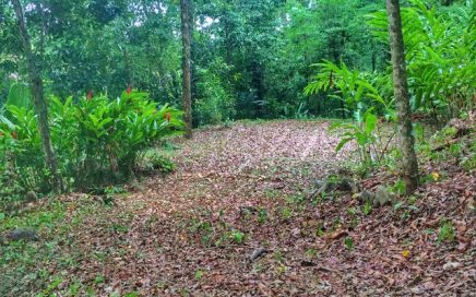1.2 ACRES – Jungle Lot With Nature Gardens,Seasonal Creeks Running Through In A Gated Community!!