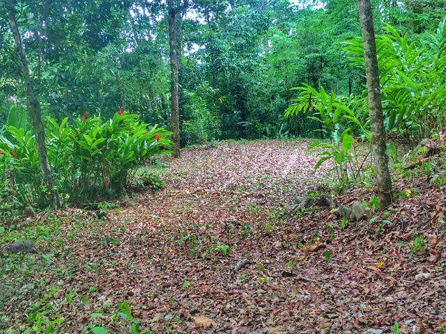 1.2 ACRES - Jungle Lot With Nature Gardens,Seasonal Creeks Running Through In A Gated Community!!