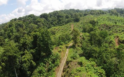 242 ACRES – Income Producing Palm Oil And Melina Farm!