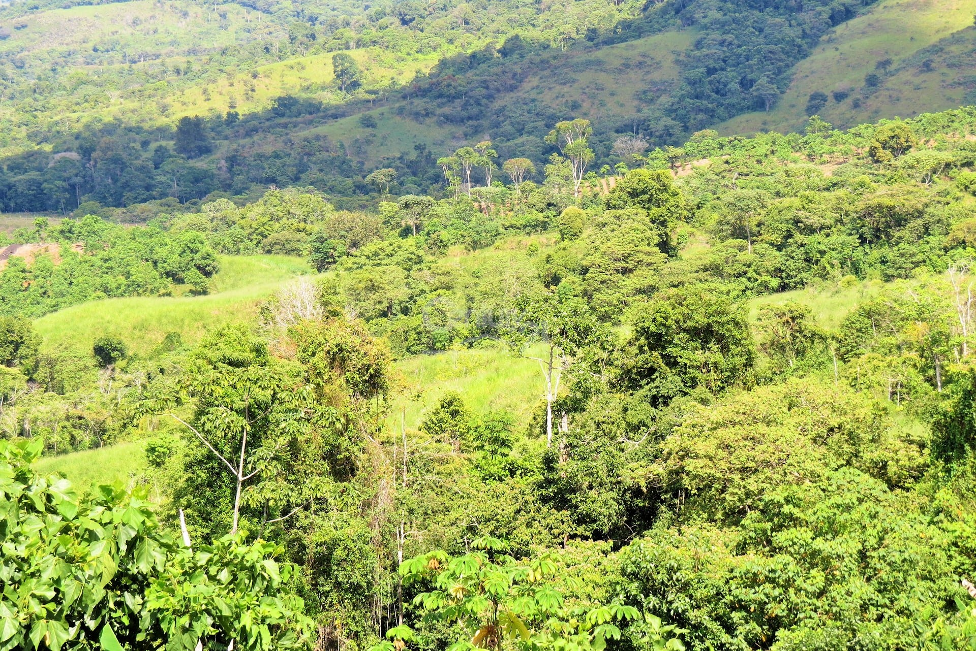 260 Acres 3 Bedroom Home On Working Farm Costa Rica