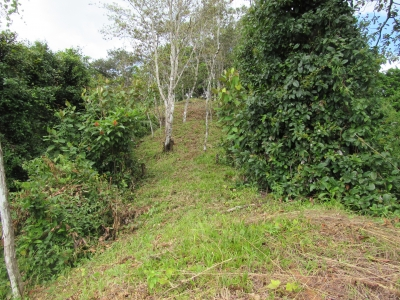 3.9 ACRES - Beautiful Ocean View Property With Multiple Building Sites And Easy Access To Rivers!!!