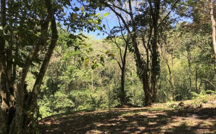 1.4 ACRES – Jungle Eco Community Lot Near the Marino Ballena Park!!!