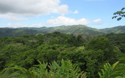 2.75 ACRES – Amazing Mountain View Property With Multiple Building Sites, Countless Fruit Trees!!!