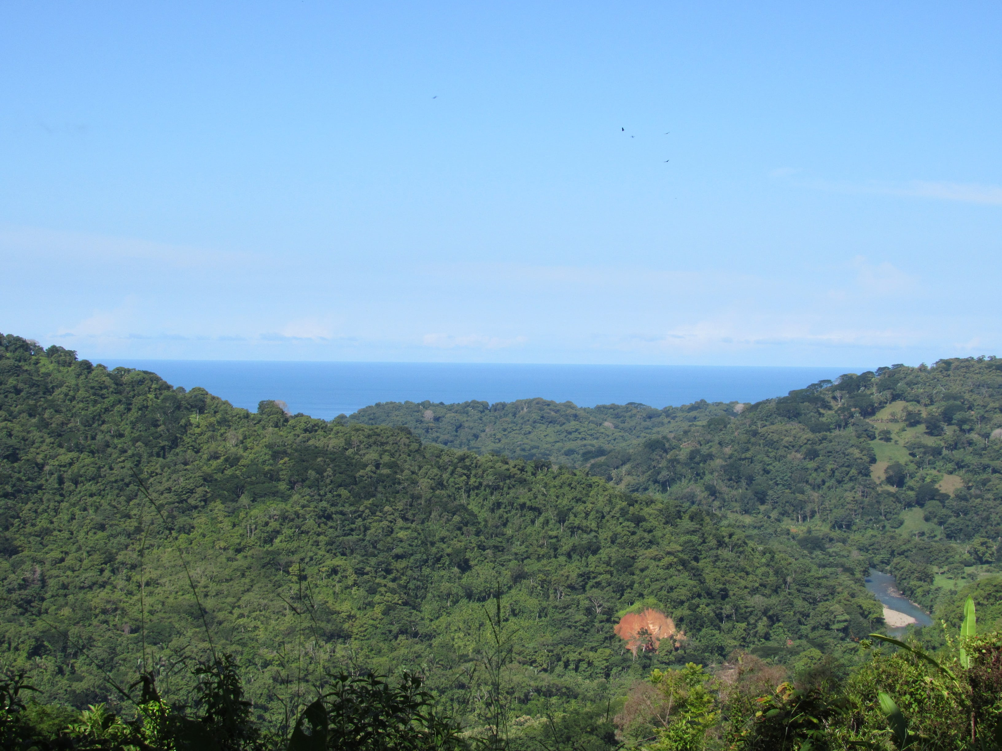 9 ACRES - Ocean View Property With Creek, Fruit Trees, Mulitple Building Sites, Open Acreage!
