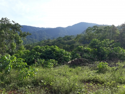6.5 ACRES - Jungle Acreage With Great Mountain Views And Town Water!!!!