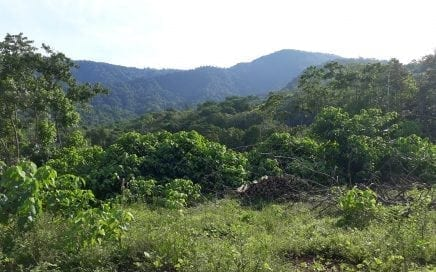 6.5 ACRES – Jungle Acreage With Great Mountain Views And Town Water!!!!