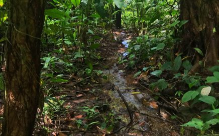 2.5 Acres -Jungle Lot Close To The Beach And Highway Ideal For Eco-Cabin and Permaculture Lifestyle.