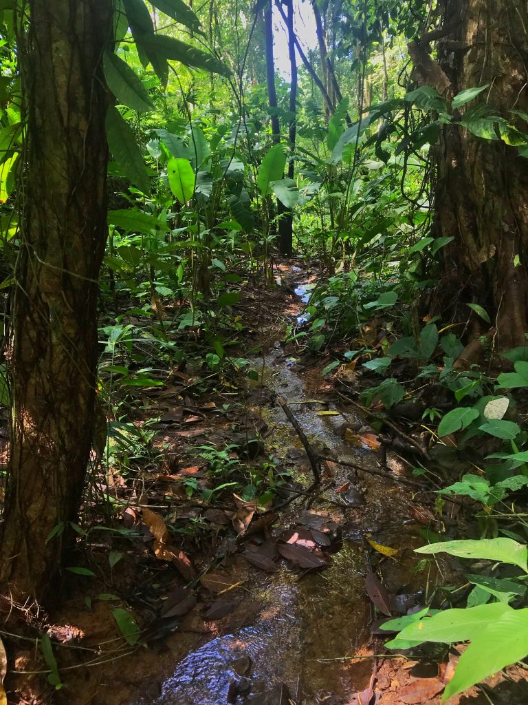 2.5 Acres -Jungle Lot Ideal For Eco Living Close To The Beach Cabin and Permaculture Lifestyle.