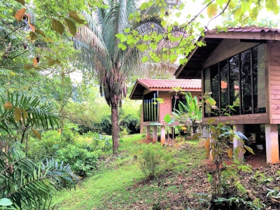 1.5 ACRES - 3 Bedroom Wooden Home With Pool On Beautiful Jungle Lot!!!!