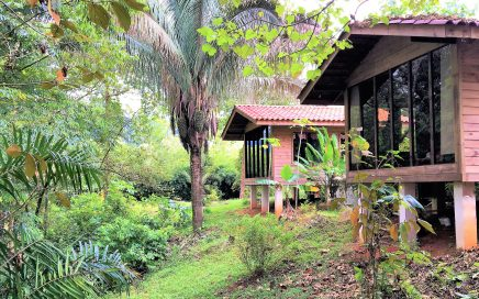 1.5 ACRES – 3 Bedroom Wooden Home With Pool On Beautiful Jungle Lot!!!!