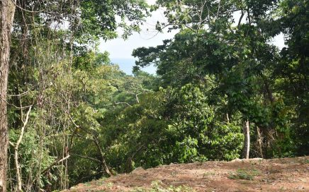 1.97 ACRES – Lot with River Border and Ocean View in Pinuelas