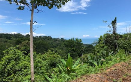 2.59 ACRES – Lot with River Border and Ocean View in Pinuelas