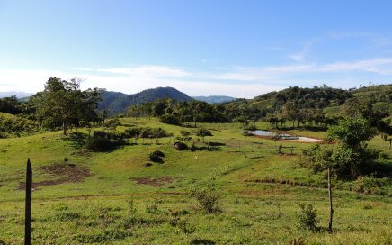 261 ACRES – Farm With Mountain And Ocean Views With Cattle, Horses, Fruit Trees, 3 Creeks!!!!