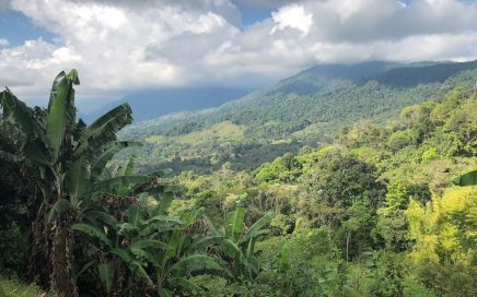 7 ACRES – 2 Bedroom Home Plus Bamboo Cabin With Fabulous Ocean And Mountain Views, Privacy, Creek, 2 More Building Sites!!!!
