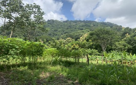 3.46 ACRES – Flat Usable Land With 3 Cabins, 136 Meters Of Paved Road Frontage!!!