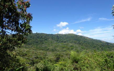 20 ACRES – Mountain View Property W/ Creek & Spring Neighbouring The Wilson Botanical Gardens!!!!!