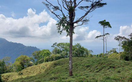 494 ACRES – Ocean View Acreage At Higher Elevation!!!