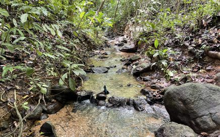 4.94 ACRES – Jungle Lot With Creek In Community With Fiber Optic And Legal Water!!!!!