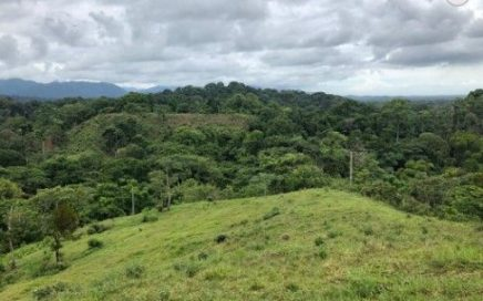 214 ACRES – Ocean View Ranch With Mix Of Open Pasture And Beautiful Jungle!!!!