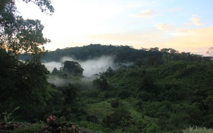 130 ACRES – Amazing Organic Farm With 2 Homes Near Golfito At A Great Price!!!!