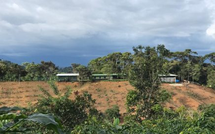 7.3 ACRES – Avocado Farm (330 Trees), 4 Bed Home, 1 Bed Guest Home, 2 Yoga Decks, Coffee, And More!!!!!