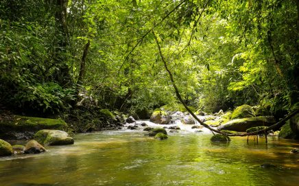 191 ACRES – Beautiful Property With Rivers, Waterfalls, And Open Usable Land!!!!